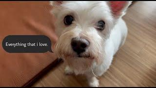 [GURI CAM] 내가 사랑하는 것들♥ / 동물들과 …