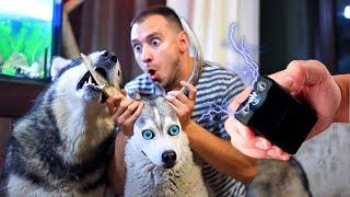 Электрошокер для собаки  Как отучить щенка кусаться ?