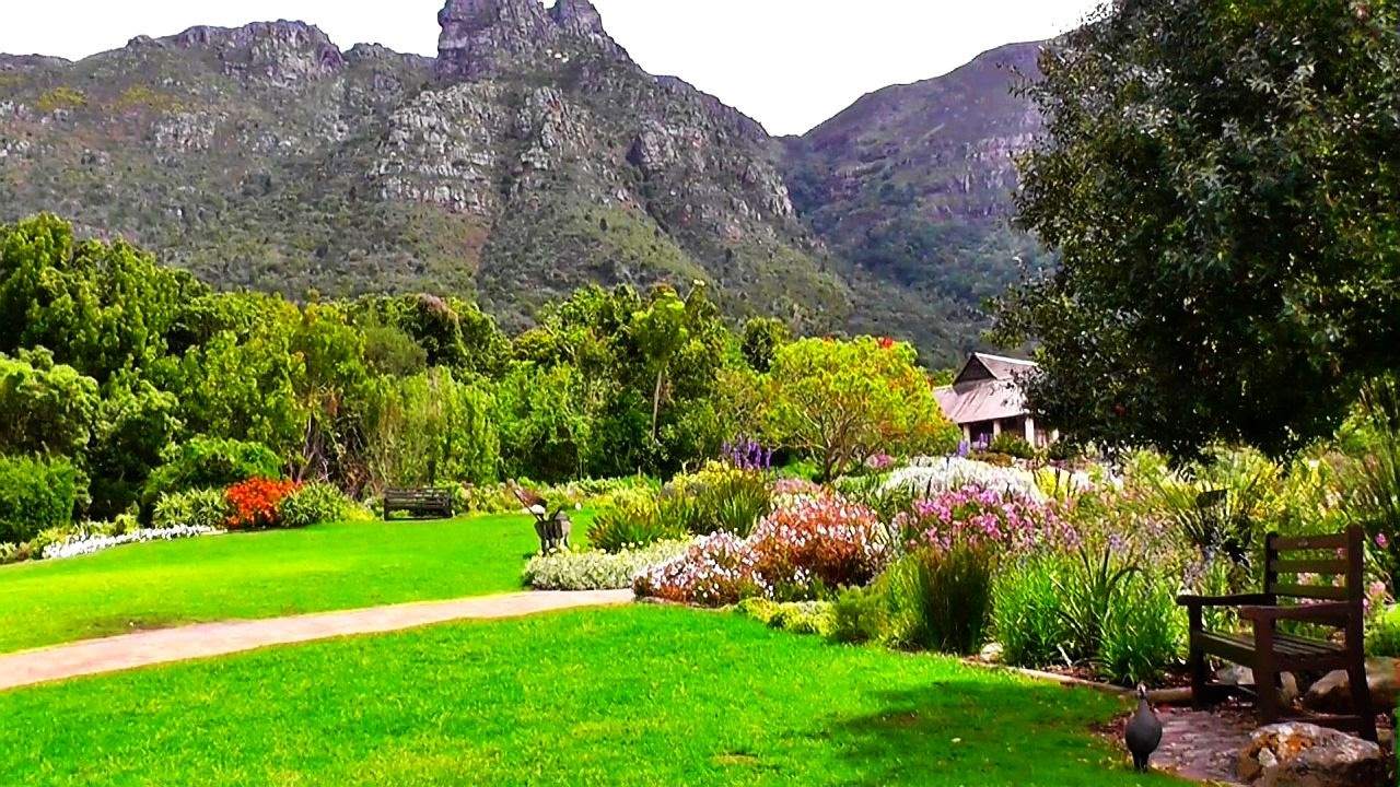 Funny Guinea Fowls Spring In The Botanical Garden Kirstenbosch Youtube