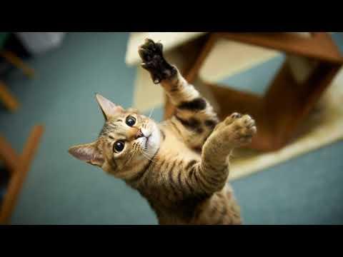 Как быстрее заживить царапины от кошки