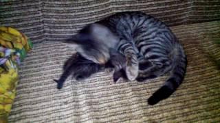 Первое обучение. Коты...