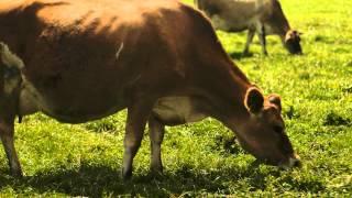 Rumiano Cheese Co. -- Non-GMO Organic Cheese