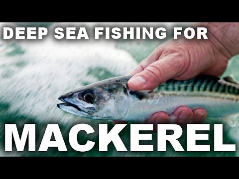 GoPro HD: Deep Sea Fishing For Mackerel - Boat Fishing Rigs County Sligo Ireland