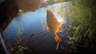 Ловля красноперки в заводях Браконьеры не стесняясь вынимают сети с рыбой