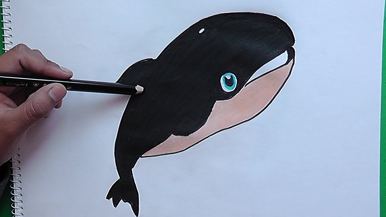 Como dibujar y colorear pàso a paso a Ballena - As drawing and ...