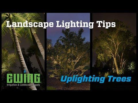 Landscape Lighting Tips Uplighting Trees