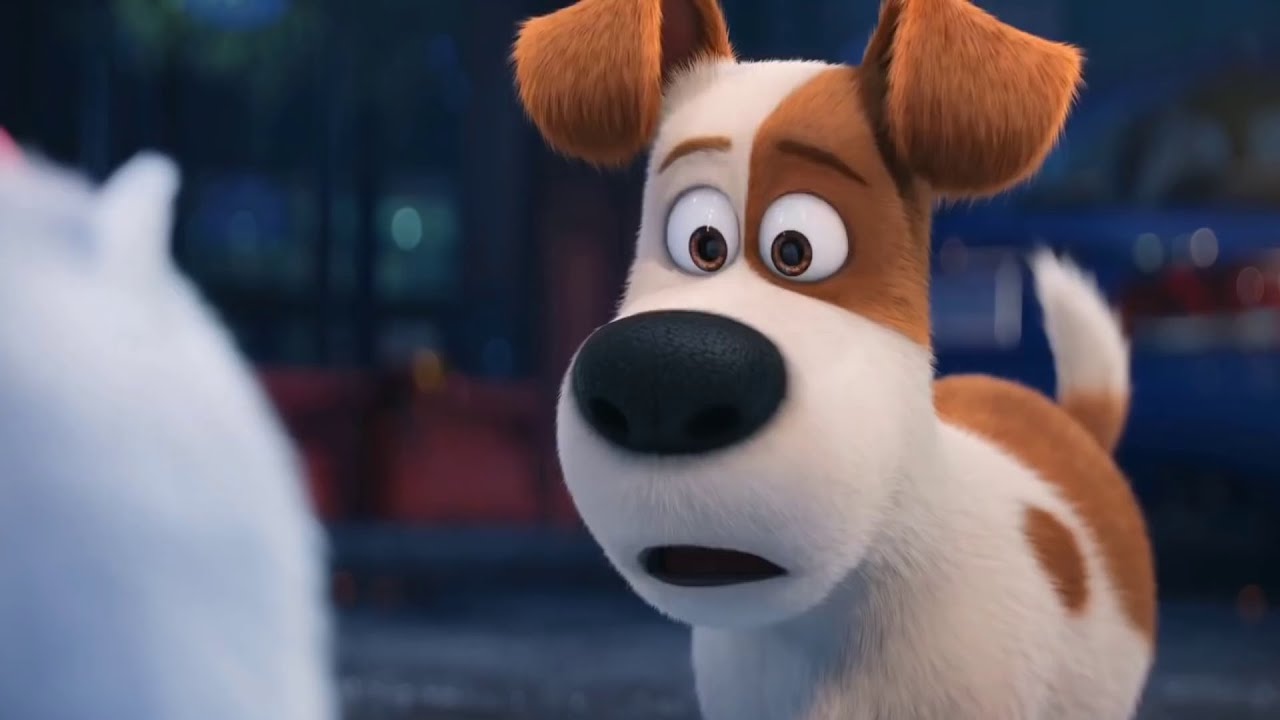Download The Secret Life of Pets - Gidget | Best Memorable Funny Moments| Cartoons for kids