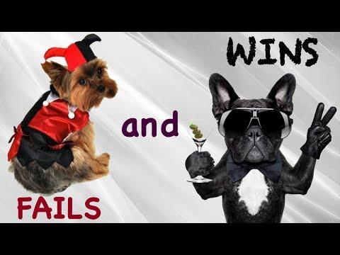 Funny dogs #10. Смешные Собаки 2019. Fails and Wins. Юмор про собак. Compilation. Приколы. LOL