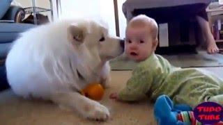 милое видео и доброе про животных и детей