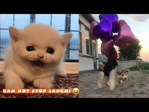 TRY NOT TO LAUGH - Funny Pets & Animals Compilations #5 | Tik Tok Videos 2018