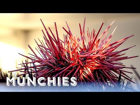 Sea Urchins Are California Gold: Hunter Gatherer