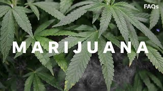 The surprising history of marijuana and why it's illegal