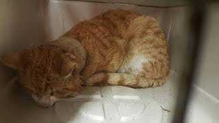 When Rescuers Found This Terrified Cat, The Roll Around His Neck Had Caused A Horrible Infection.