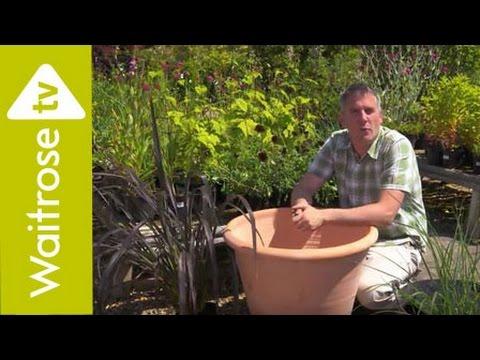 Matt James Plants an Architectural Pot | Waitrose Garden