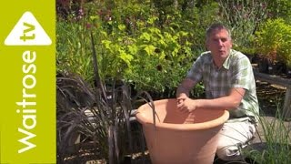 Matt James Plants an Architectural Pot | Waitrose Garden