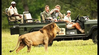 Mala Mala Realtime Lion Sighting!