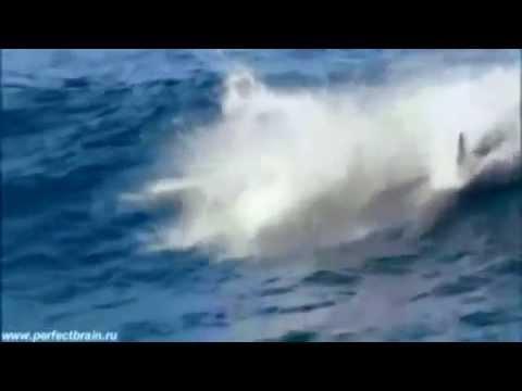 Дельфинёнок