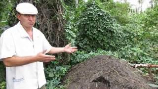 Чернозём на даче - покупать или выращивать (3)?