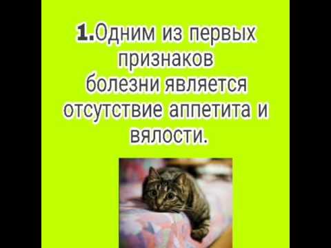 Вопрос: Как понять, что кошка заболела?
