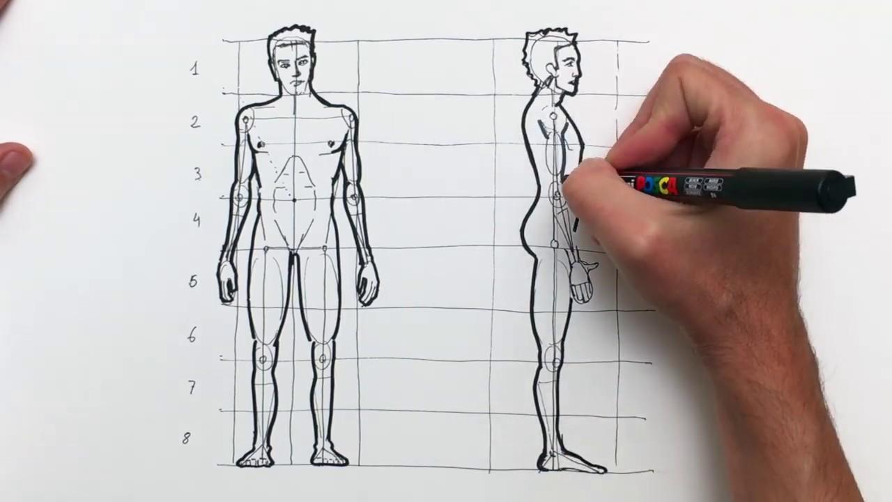 Cómo Aprender A Dibujar La Figura Humana Y Sus Proporciones
