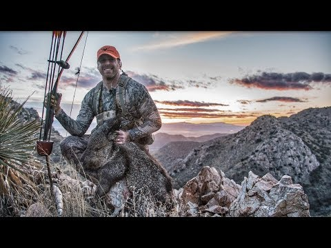 Archery Javelina hunt arizona