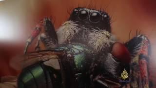 غروز مقدسي يهوى تصوير الحشرات الصغيرة