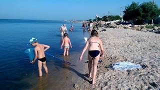Мор рыбы в Бердянске 2016