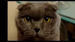 Русские приколы с кошками Смешные кошки с русским колоритом 2017