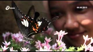 Taman Rama-Rama Pulau Pinang Dibuka Semula Pada Suku Pertama 2016