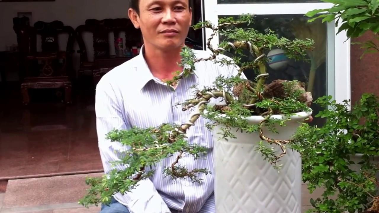 Tạo cây Sam thế thác đổ
