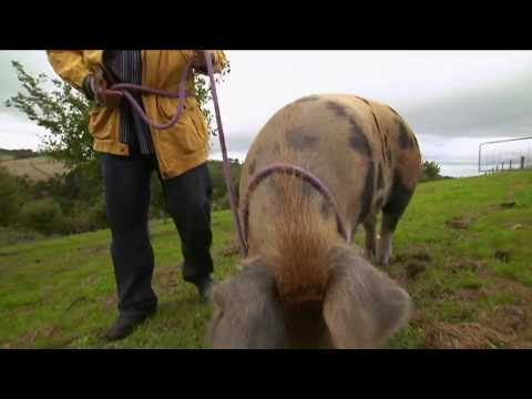 Max Meets A Retired Couple Living The Truffle Dream Life By The Sea