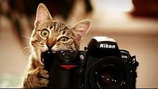 Смотреть смешное видео 4٭٭٭ Самые смешные приколы! Смешно до слез! Смешные кошки, животные.