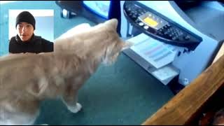 Reaction To (FUNNY CAT GETS SCARED OF PAPER)😂😂