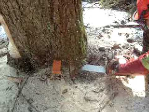 abattage d 39 un arbre xplosif youtube. Black Bedroom Furniture Sets. Home Design Ideas