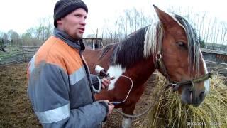 Шприц-пистолет для животных// Жизнь в деревне
