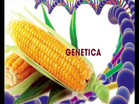 Agribiotech: BT Cowpea's field Trials