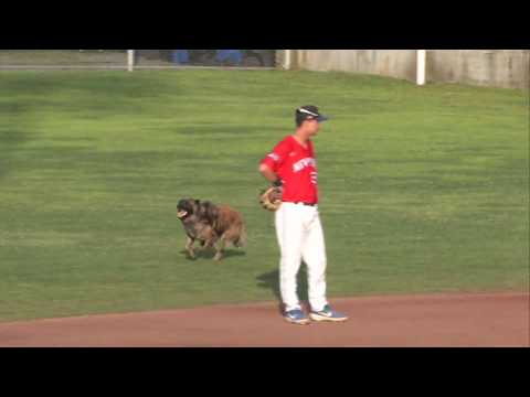 The Ace & TJ Show - Lost Dog Interrupts College Baseball Game!