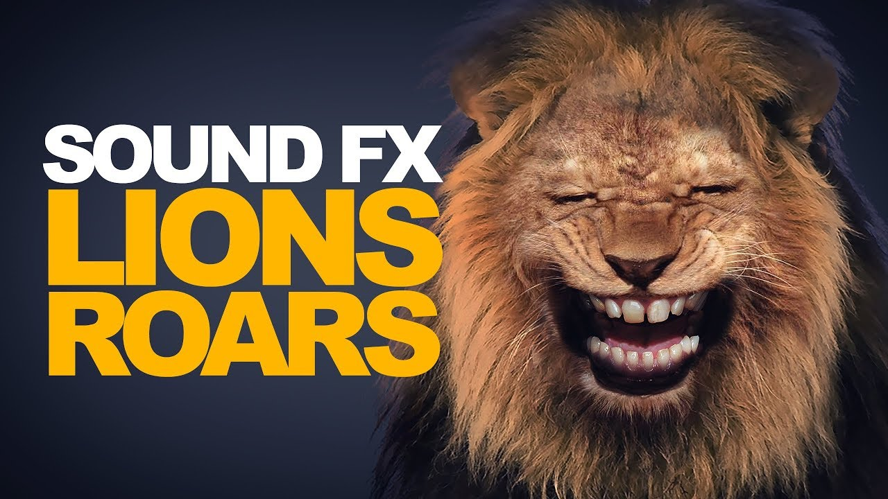 LION ROAR | Sound Effect [High Quality] - YouTube - photo#39