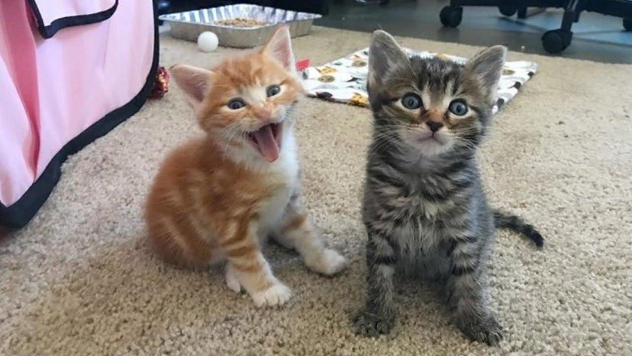 一時的に2匹の子猫を預かるつもりだった女性。数週間が経ち2匹の里親を募集することにしたが…