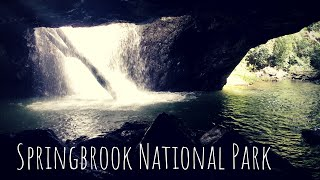 Springbrook National Park-  Natural Bridge and Purling Brook F…