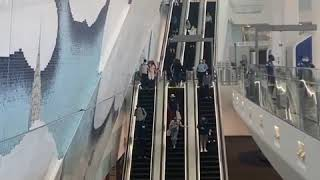 Besser als am BER - synchronisierte Rolltreppen am La Guardia Airport in New York