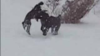 Video Kiko and Tillie in a snowstorm download MP3, 3GP, MP4, WEBM, AVI, FLV November 2017