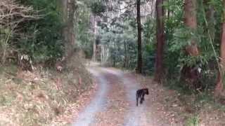 ブログやってます。 http://s.ameblo.jp/fumiko-kaiken/