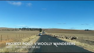 Project Polly v Woolly Wanderers