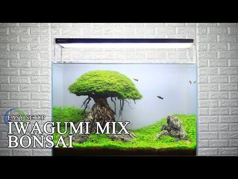 how-about-setup-iwagumi-mix-bonsai