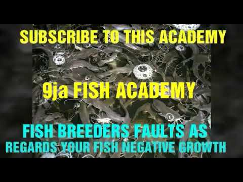 FISH BREEDERS FAULTS THAT AFFECTS YOUR FISH GROWTH
