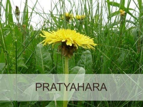 Ser pleno 17 . Pratyahara