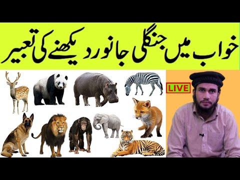 To See Animals In Dream Khwab Mein Janwar Dekhna | Khwab Mein Animals Dekhna |  Janwar Say Darna