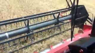 wheat harvest sw missouri 2388 case ih combine