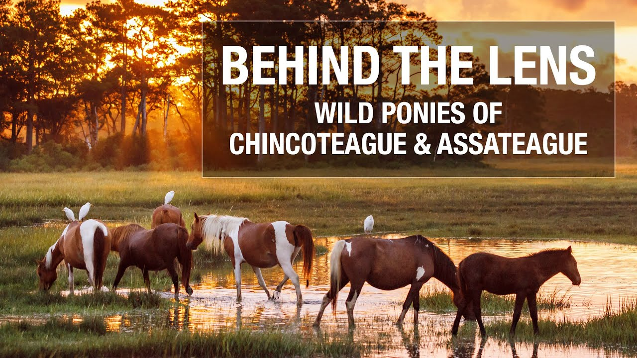 Behind the Lens - Wild Ponies of Chincoteague and Assateague